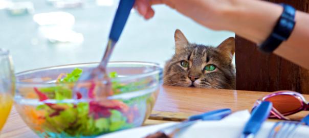 猫が食べたくてたまらない人間の食べ物18選