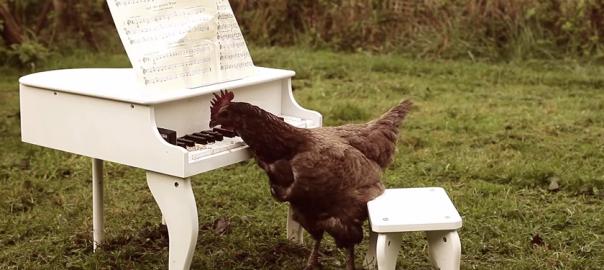 【エサ、美味しい】ニワトリ渾身のピアノ演奏