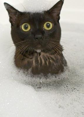 ネコだけど、モデル6