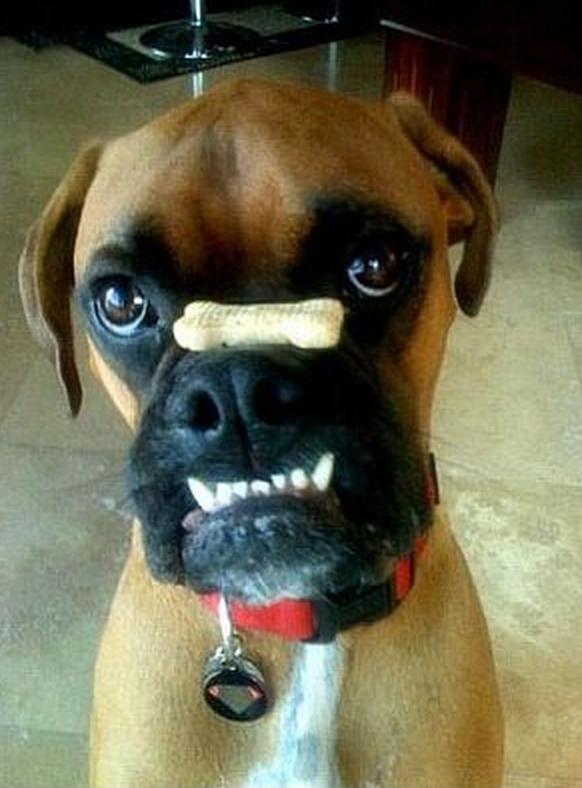 おちゃめな犬