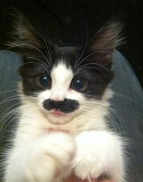 ネコだけど、モデル18