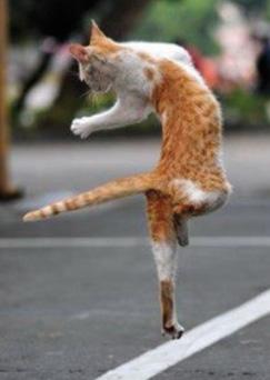 ネコだけど、モデル8