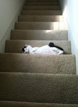 ネコだけど、モデル3
