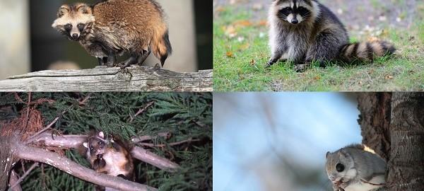 あなたは見分けがつきますか?激似を見分ける動物クイズ(全10問)