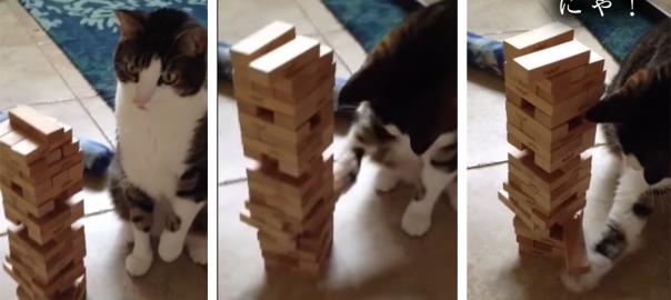 このネコ、天才か?ネコがジェンガで華麗な3コンボを見せつける!(83秒)