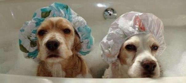 【お風呂が好きすぎて】 入浴したら可愛さが倍増した犬たち16選