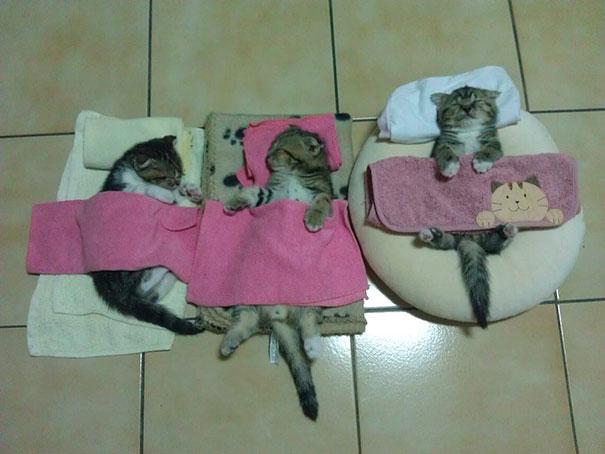 funny-sleeping-cats-16