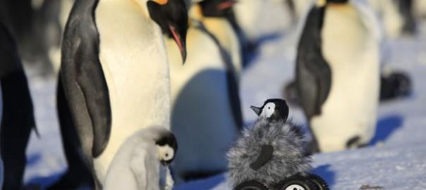 【新発見】最も自然にペンギンの輪に溶け込めるのは「ペンギン人形付き四駆型ラジコン」