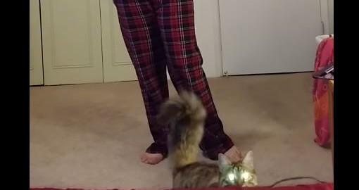レリゴー♪させてくれないワガママ猫ちゃん(0:34)