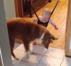 「こう飛べばいいんだワン」赤ちゃんにジャンプを教えるイヌが可愛すぎる