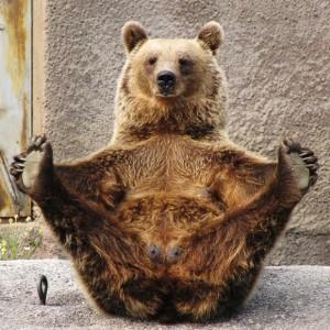 Funny-Bear-111