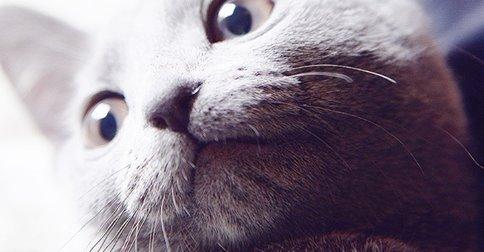 【ネコとキス】猫の口元がタマらにゃい18選