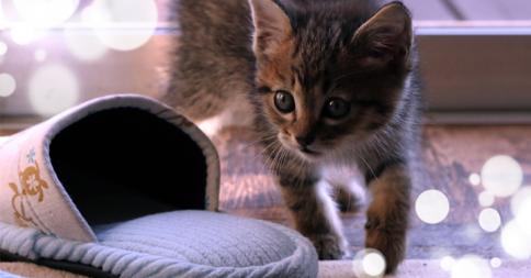 【悲劇】ニャンてこった......スリッパに顔がすっぽりハマってしまった猫