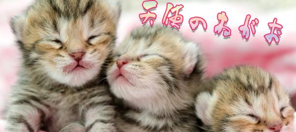 「なんだ、ただの天使か」可愛すぎてずっと見ていられる子猫の寝顔17選