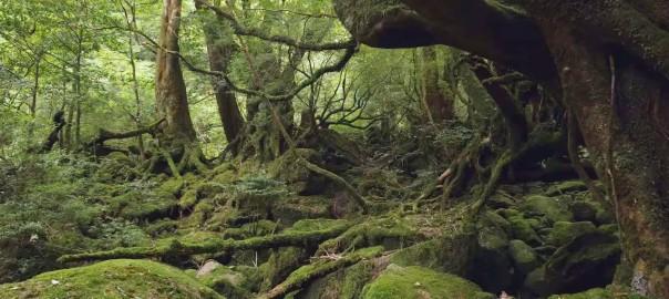【そうだ、鹿児島へ行こう!】鹿児島県の名所を撮影した4K映像が美しすぎる