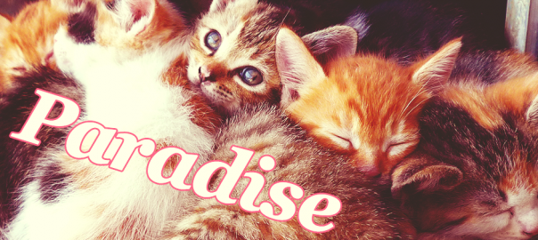 【猫好き必見旅行先】猫が好きで好きで好きでたまらないなら、行ってみよう猫の楽園へ