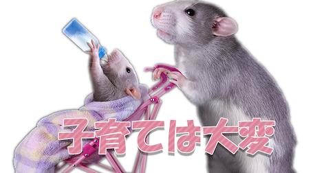 【考え方の違い】教育方針が食い違うネズミの夫婦(0:47)