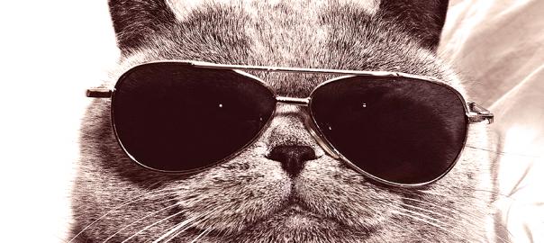 【コタツの季節がやってきた】ネコの画像でボケてみた 15選