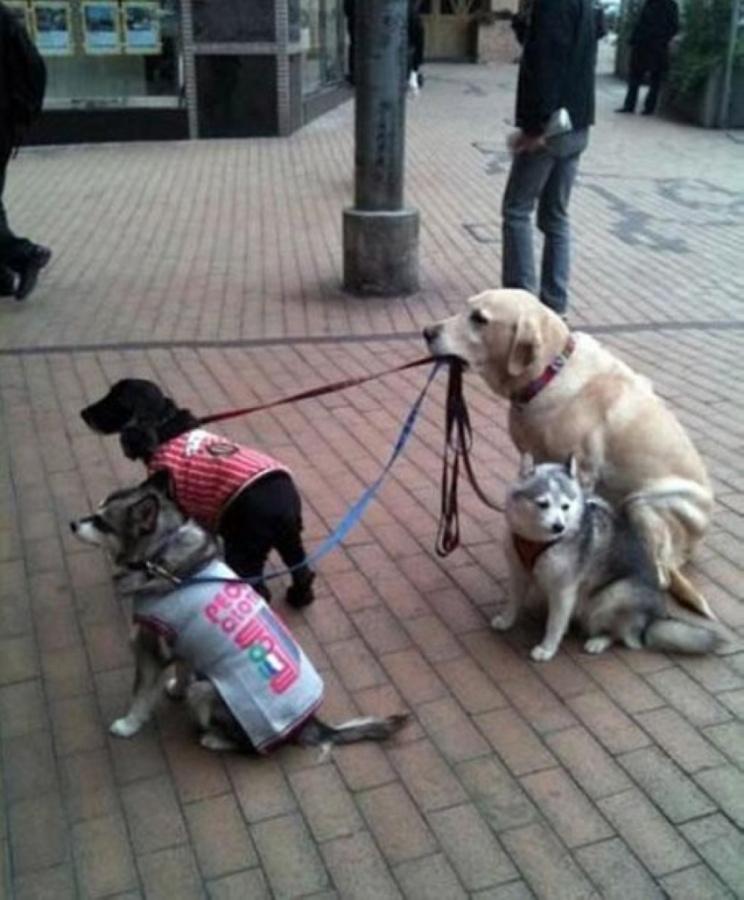 犬を散歩する犬