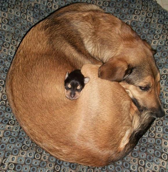 犬に抱かれる子犬