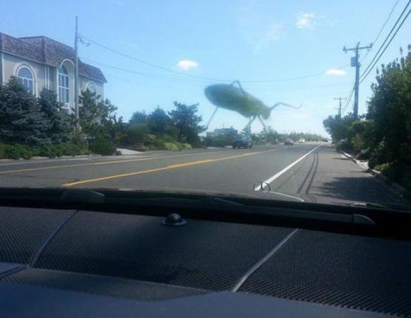巨大昆虫発見