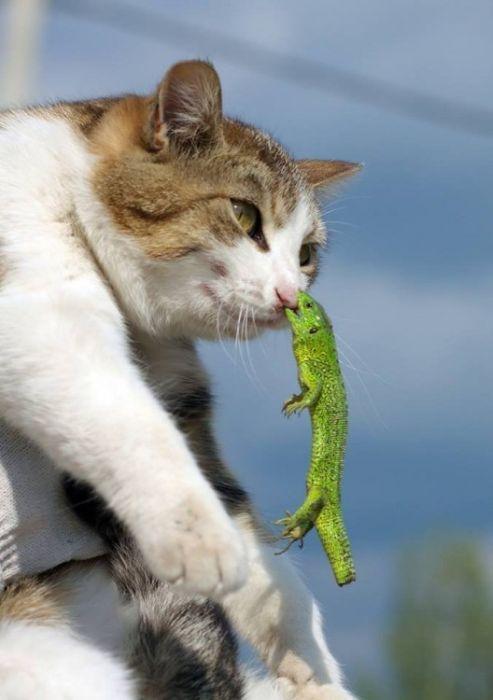 猫に噛み付いたトカゲ