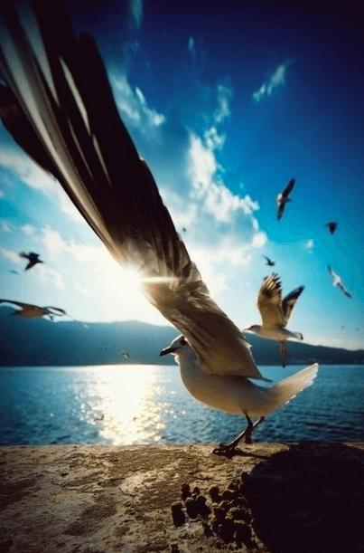 綺麗な海を飛び回る鳥