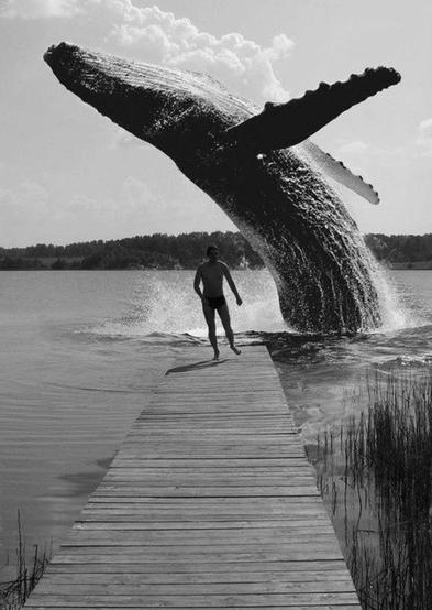 目の前でジャンプするクジラ