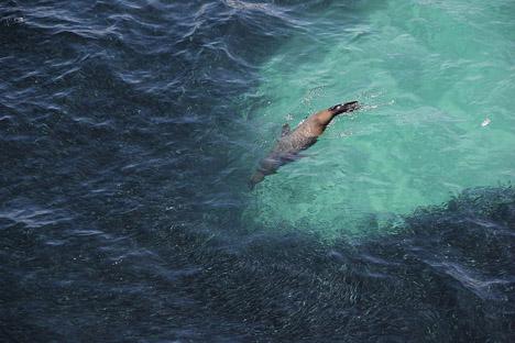 Oil-Spill-California-Fish-5