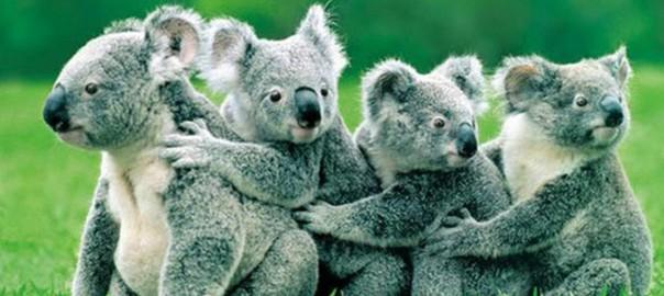 この家族の一員になれて幸せ!動物の親子の愛情を感じる15の写真