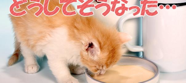 子猫「お皿からミルクを飲む」に初挑戦→飲み方分からず大洪水(0:13)