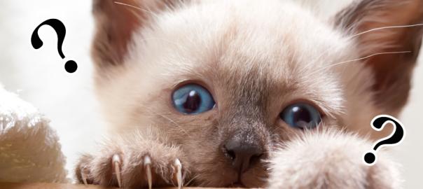 「人生深いにゃ。」ネコが日ごろから抱いている13の疑問や考え