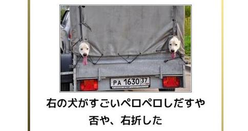 【可愛いだけじゃ物足りない】犬の画像でボケてみた11選