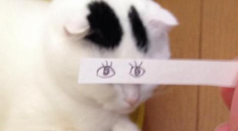 ネコのお目めを10秒で可愛くする「ネコモンタージュ」が癒される。