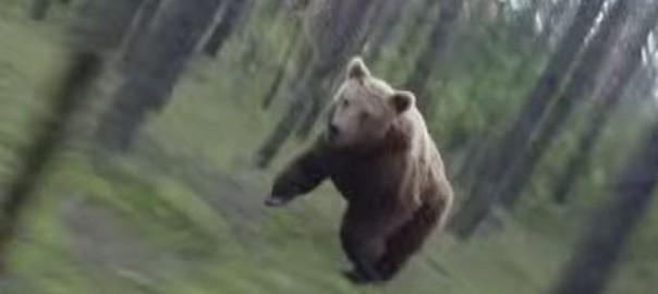 怖すぎる!森の中をサイクリングしていたら、巨大クマが全力で猛追(01:24)