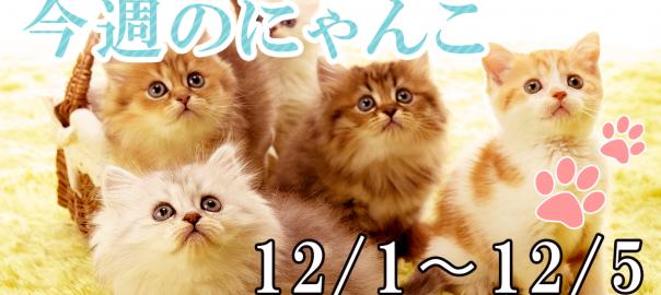 【今週のにゃんこ】12/1〜12/5までの「今日のにゃんこ」