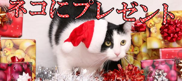 もうすぐクリスマス!ネコが喜ぶプレゼント7選