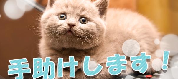 【ネコでライフハック】猫がいないと出来ない素晴らしい生活15選