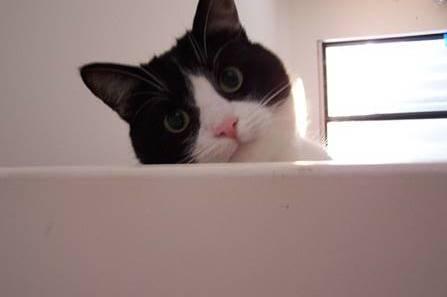 09103944_cat7