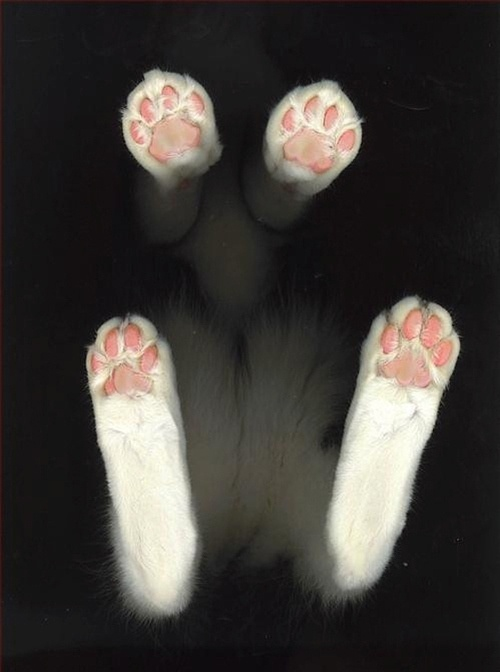 Cat-seen-from-below