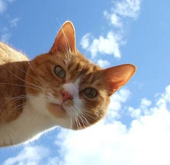cat-Picture-11