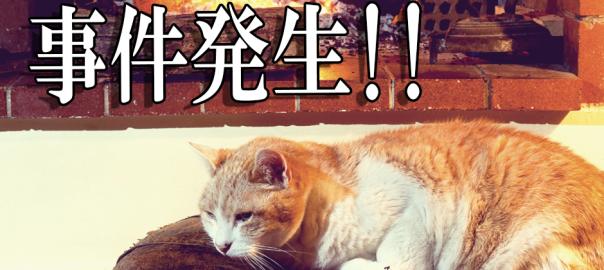 ネコ界で凶悪事件発生中。重要参考人:「暖炉」