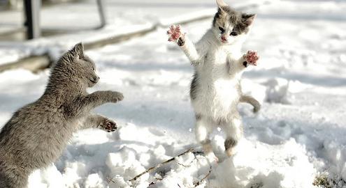 【ネコもコタツで丸くならないレベル】初雪で大はしゃぎする動物16選