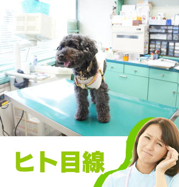 10_動物病院→刑務所_1