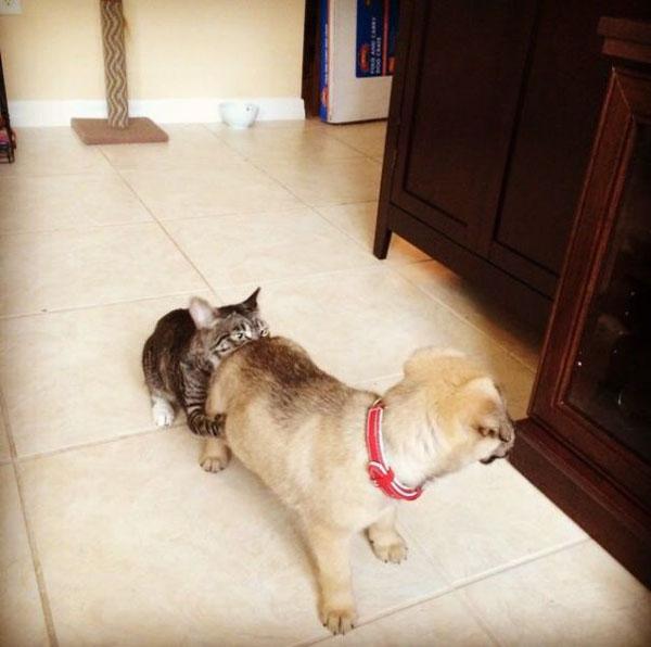 犬のおしりのニオイを嗅ぐ猫
