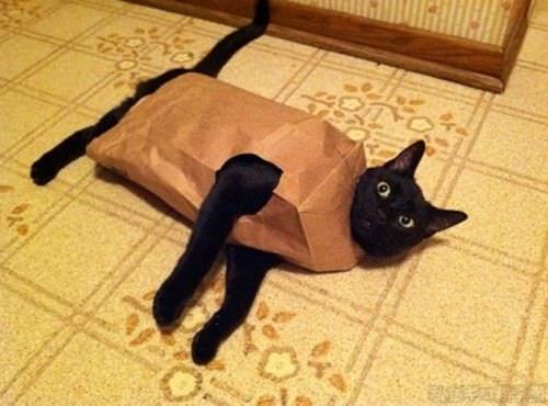 ネコの面白画像