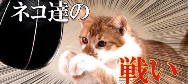 【動くものはみんにゃ敵】ネコたちのほのぼのする戦い15選