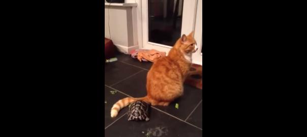 モフモフ好きなカメさんの頭突きで突撃アピール(2分16秒)