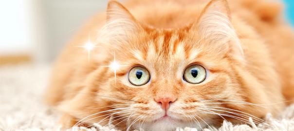予想不可能すぎて癒される!ネコたちのちょっと気になる行動15選