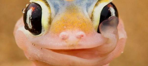 クリクリの目が特徴。爬虫類がのかわいさが予想を超えていた